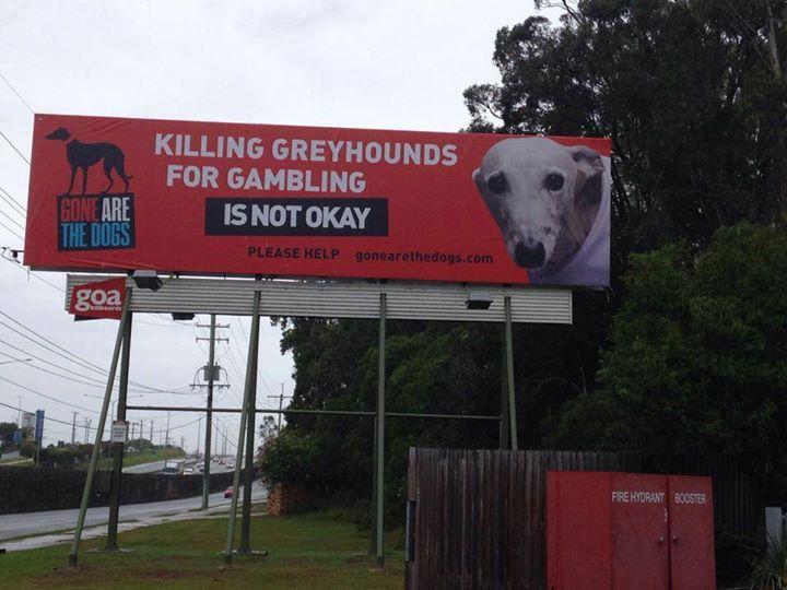 Killing Greyhounds for Gambling is not Okay_billboard Billboard