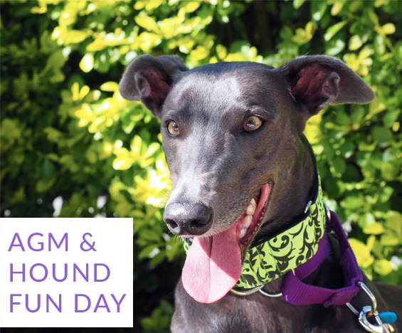 AGM & Hound fun day May 2018