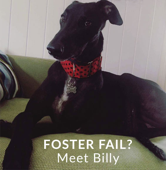 Foster Fail? Meet Billy