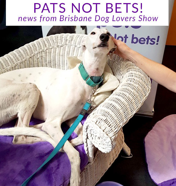 Pats not bets at the Brisbane Dog Lovers show