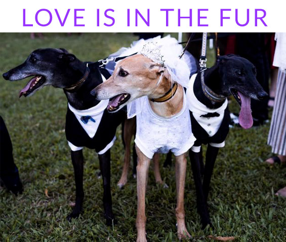 Love is in the fur