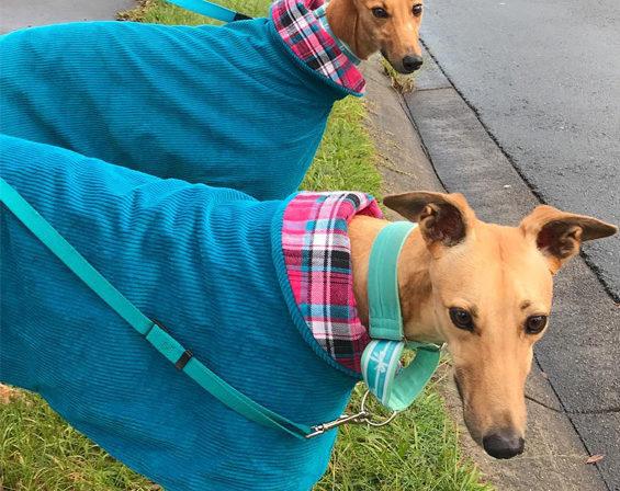 Sisters reunited - Elsie & Freda