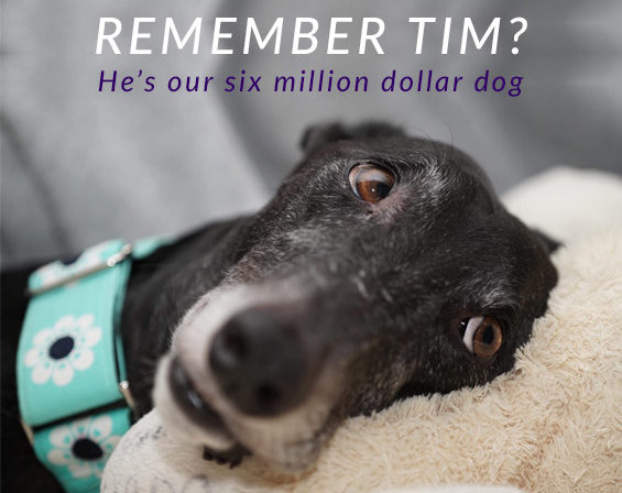 Remember Tim