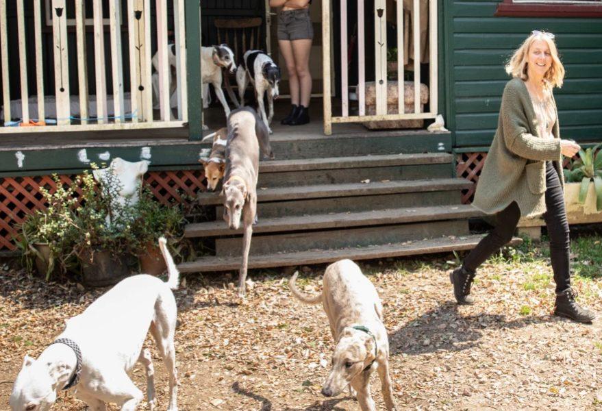 Lisda White & Greyhounds