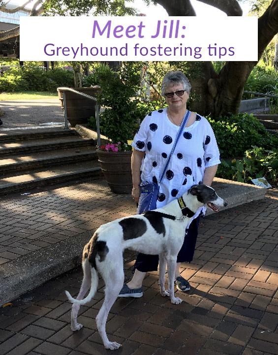 Meet Jill: Greyhound Fostering tips