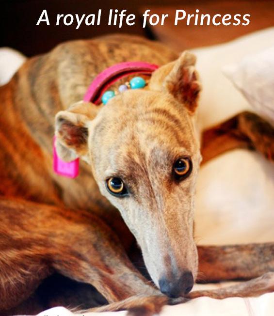 A royal life for Princess