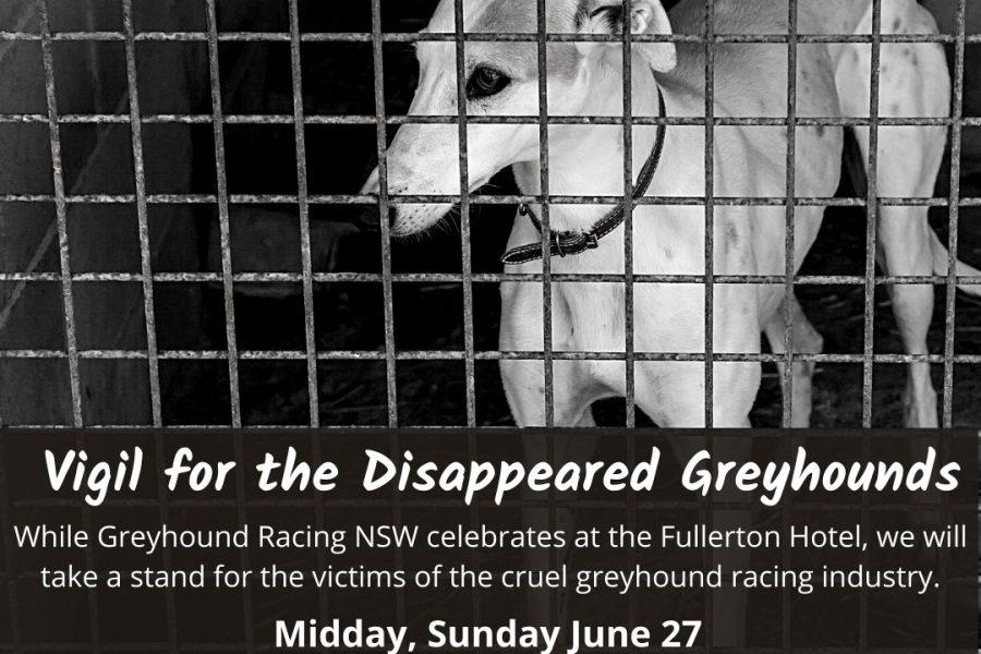 Greyhound Vigil Sydney